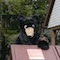 Mar 27, 2015: Braxton Bear inspects a supposedly 'bear-proof' trash can, looking for goodies!